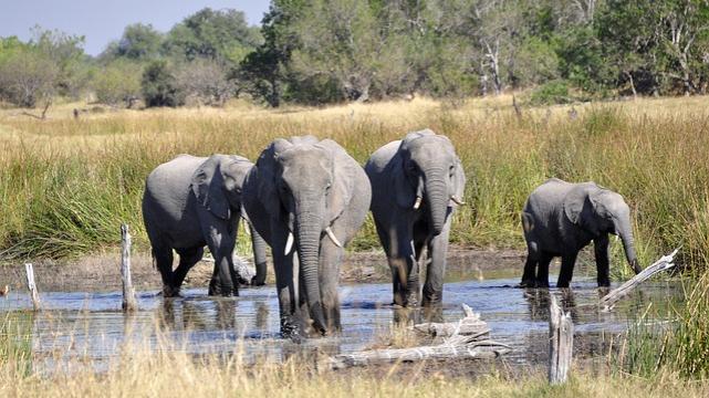 elephant-55051_640