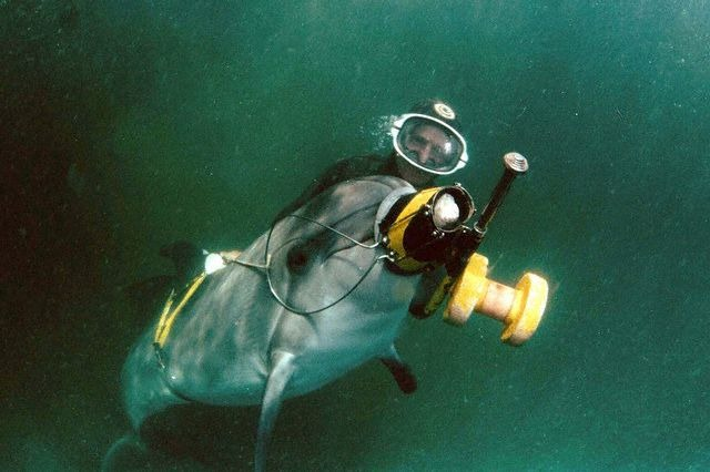 Original caption: A dolphin training in the Black Sea. January 1, 1996 SEBASTOPOL, CRIMEE, Ukraine