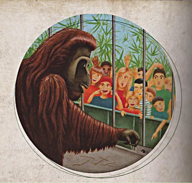 orang-code-animal