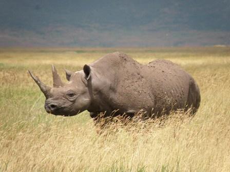 1-rhino-noir-DR-RICHARD-EMSLIE-UICN
