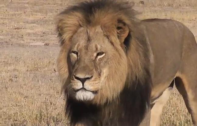 648x415_lion-cecil-zimbabwe
