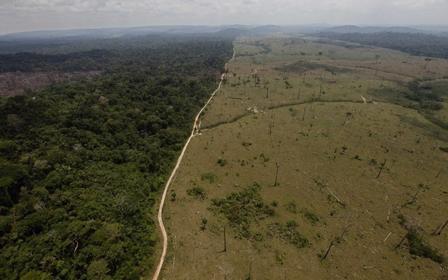 Brazil Forest Law Battle