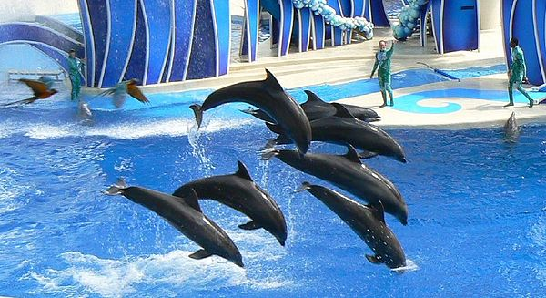Performing_Bottlenose_Dolphins