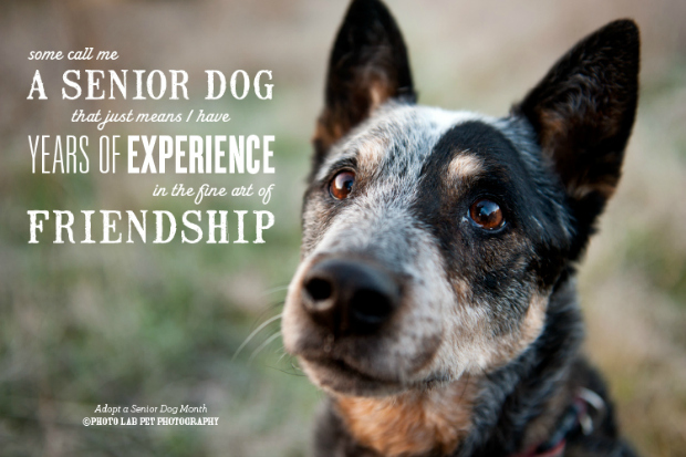 senior_dogs
