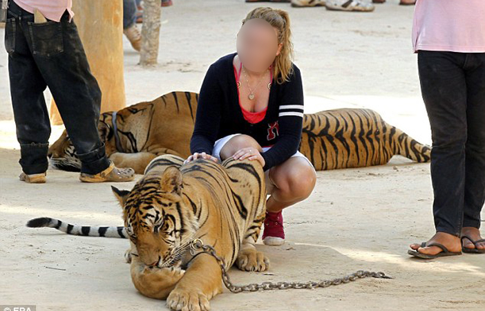 Tiger-Seflie.jpg