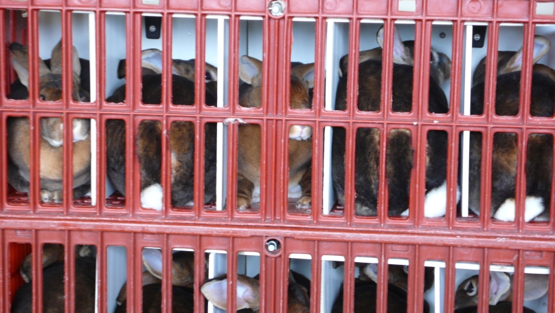 17-lapins-entasses-cages-transport-2007