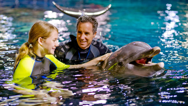 dolphins-in-depth-00.jpg