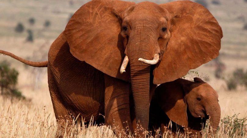 elephant-7_5118916.jpg