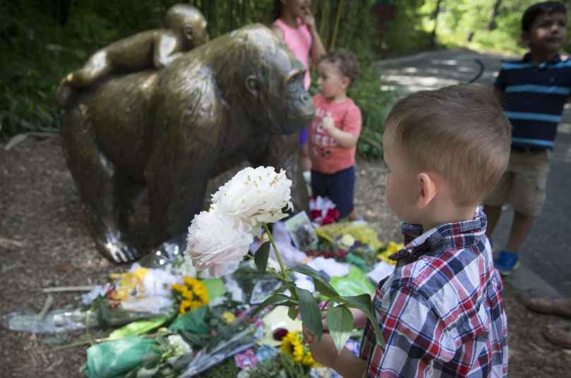 2048x1536-fit_a-boy-brings-flowers-to-put-beside-a-statue-of-a-gorilla-outside-the-shuttered-gorilla-world-exhibit